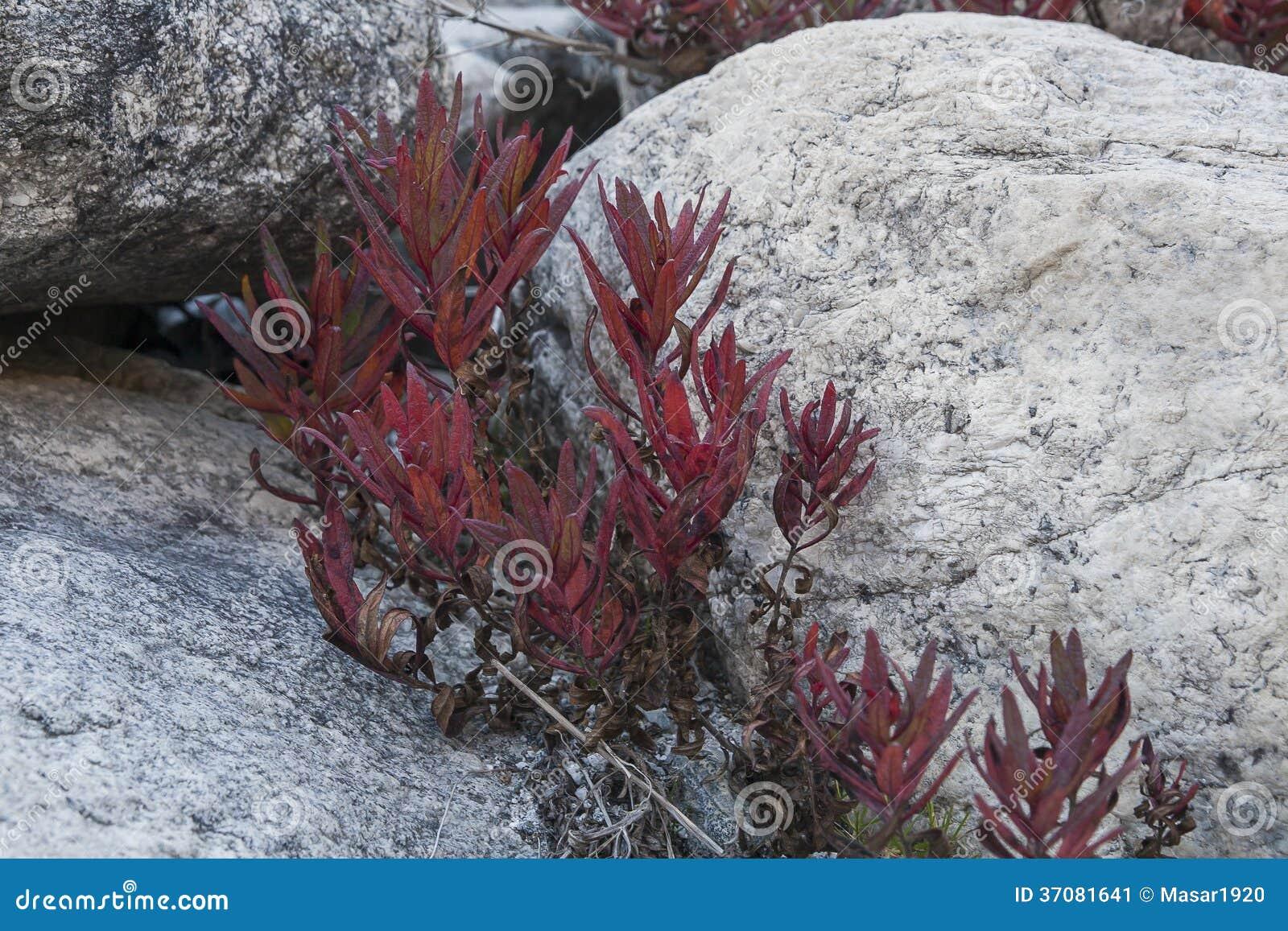 Download Roślina obraz stock. Obraz złożonej z jesienny, natura - 37081641