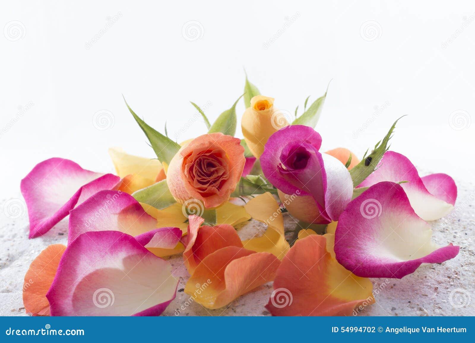 Ro och petals