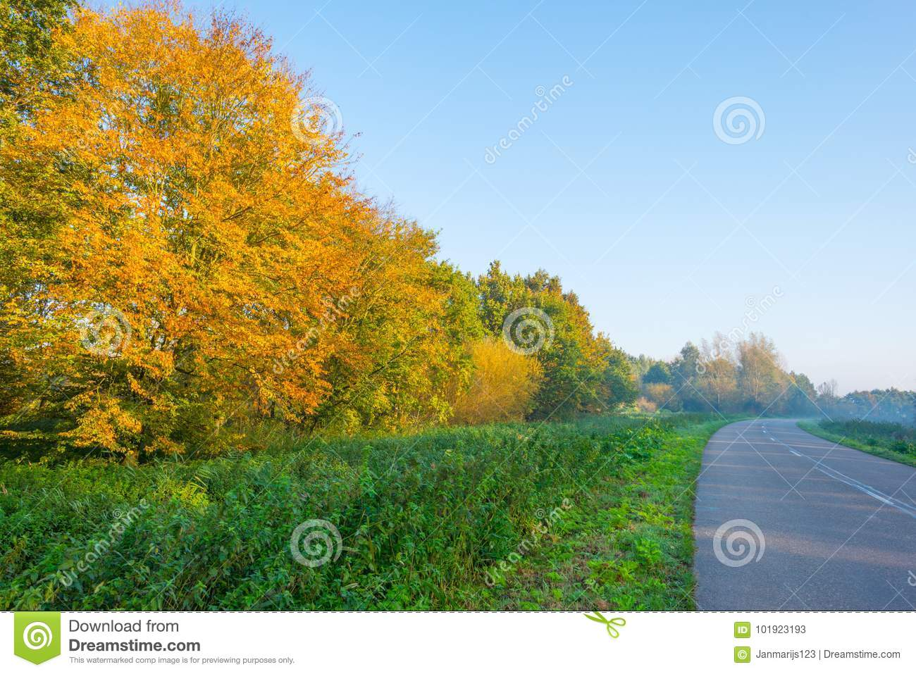Road Along Trees In Fall Colors At Sunrise Stock Image - Image of ...