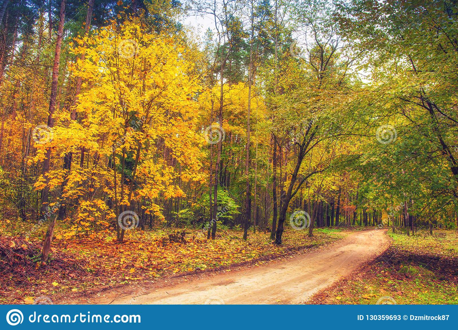 Road in autumn forest. Nature landscape. Fall. Colorful trees in forest. Yellow leaves on trees in woodland