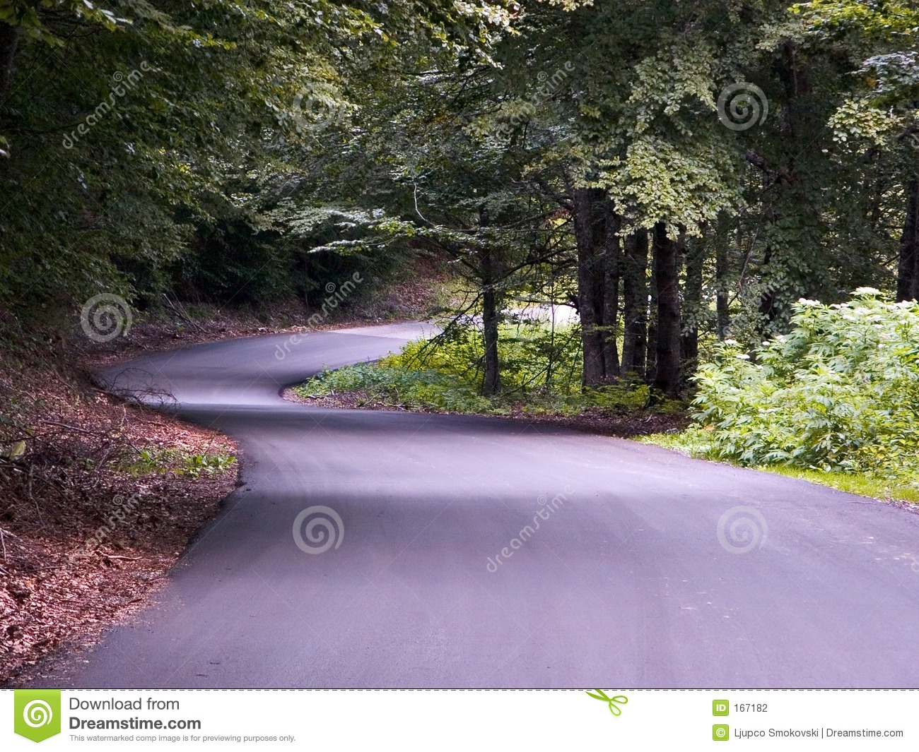 A road in a beautiful forest