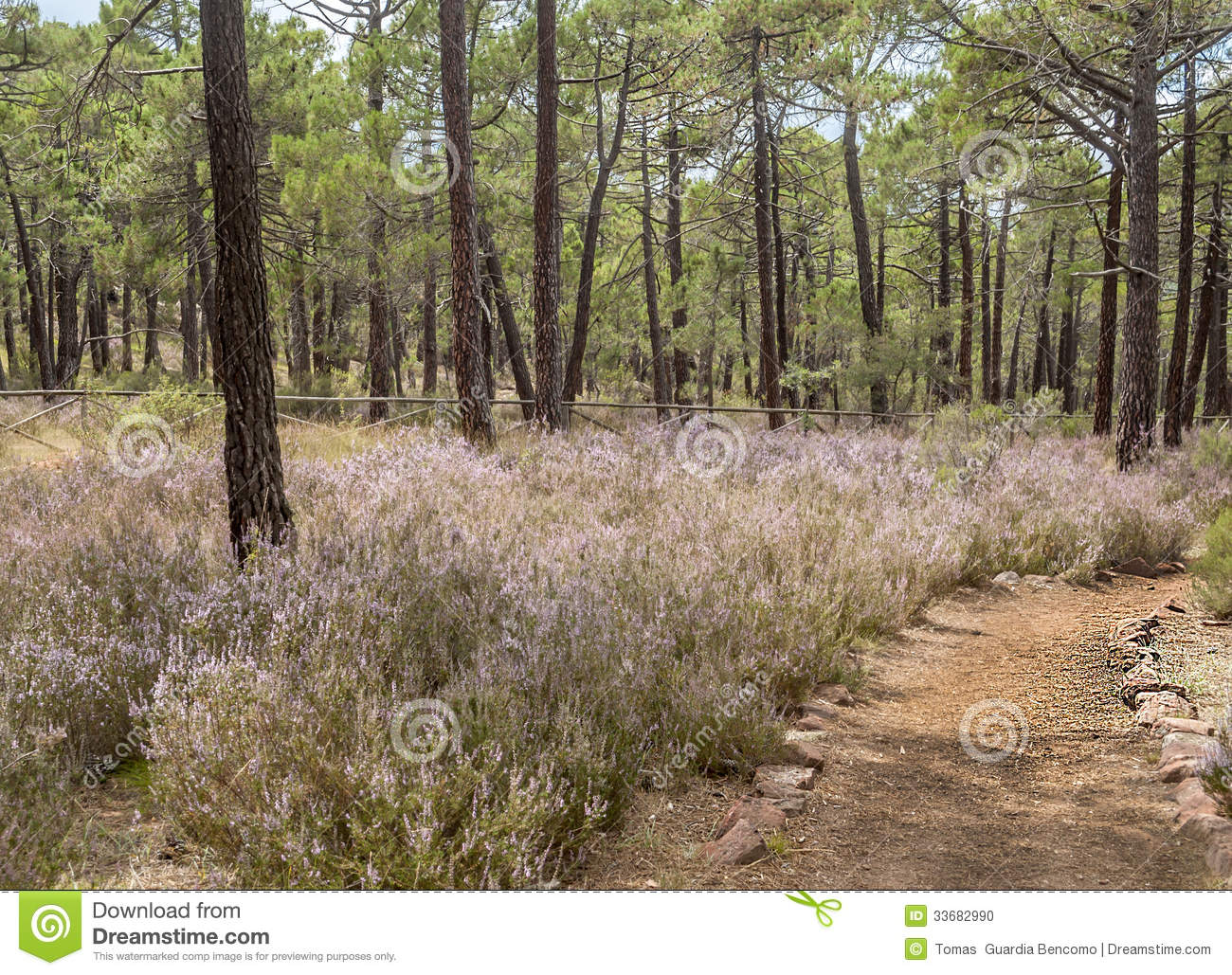 Road in the forest stock photo image 33682990 - Flowers that grow on tree trunks ...