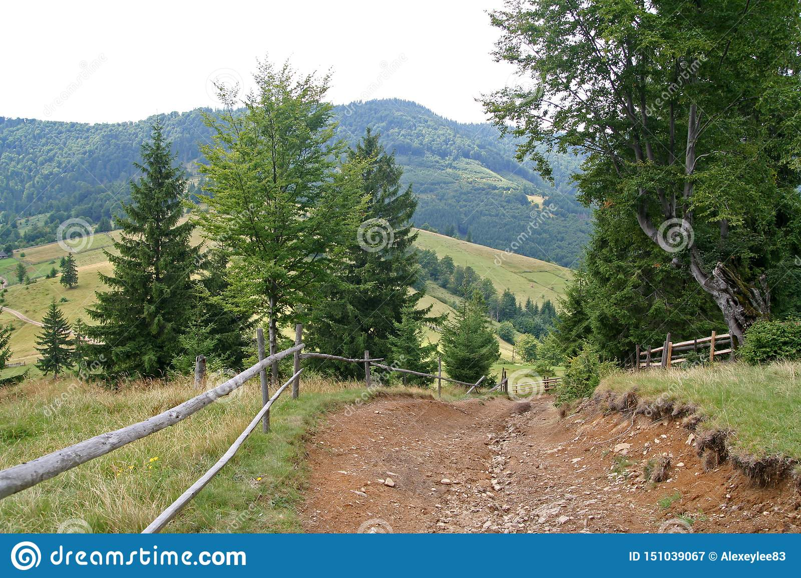 Road in the mountains in summer, Carpathians Ukraine