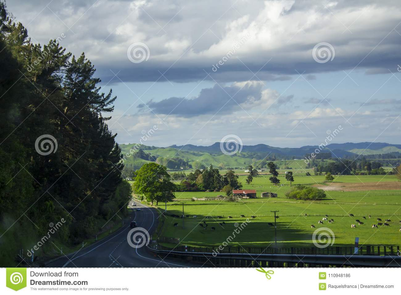 Stunning landscape with vibrant green meadows and cows grazing
