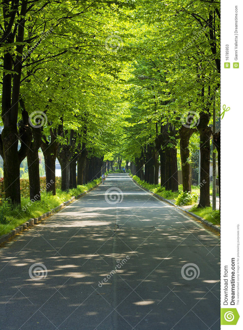 Road In A Park With Row Of Trees Stock Photos