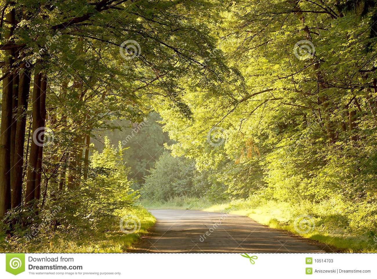 Road through summer forest at sunrise