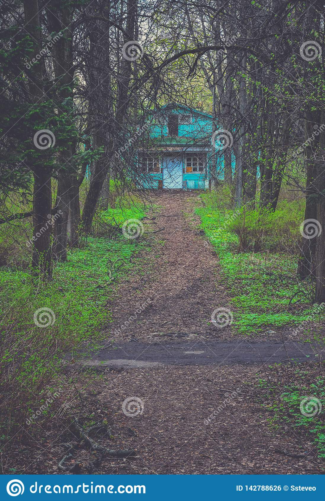 Road to the house in the forest