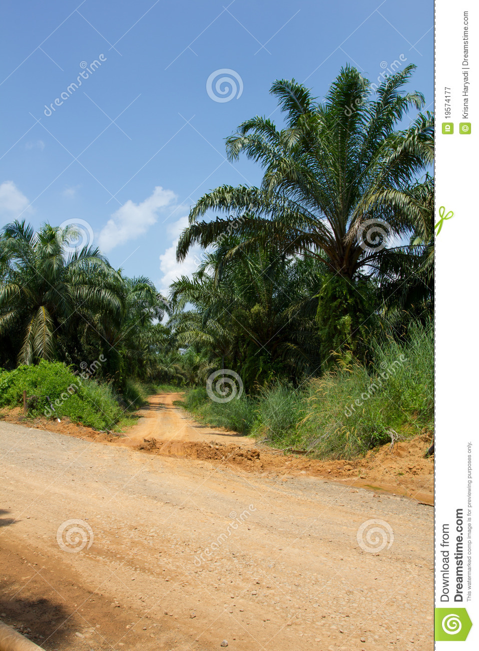 Road To Oil Palm Tree Plantation Area. Stock Image - Image ...