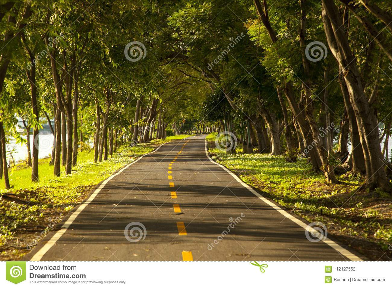Road With Trees On Both Sides Stock Photo - Image of destinations ...