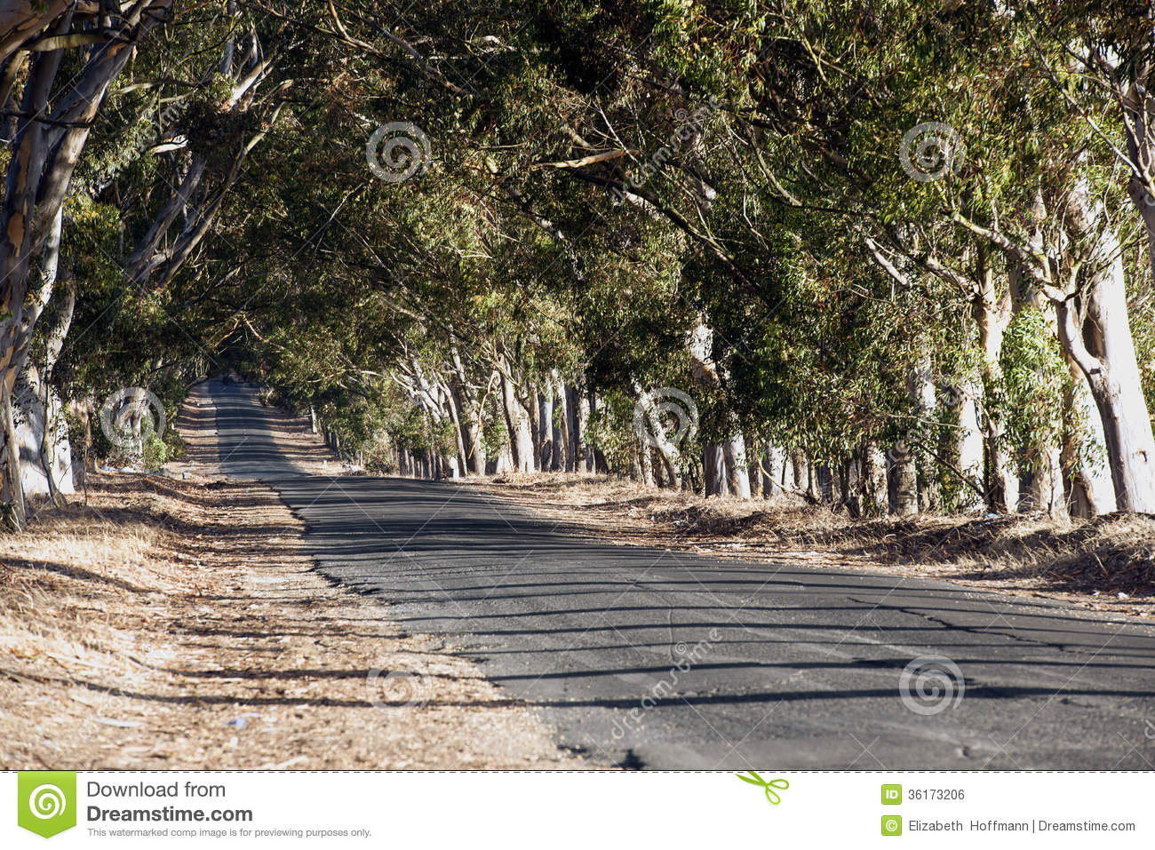 Road Between The Trees Royalty Free Stock Image Image