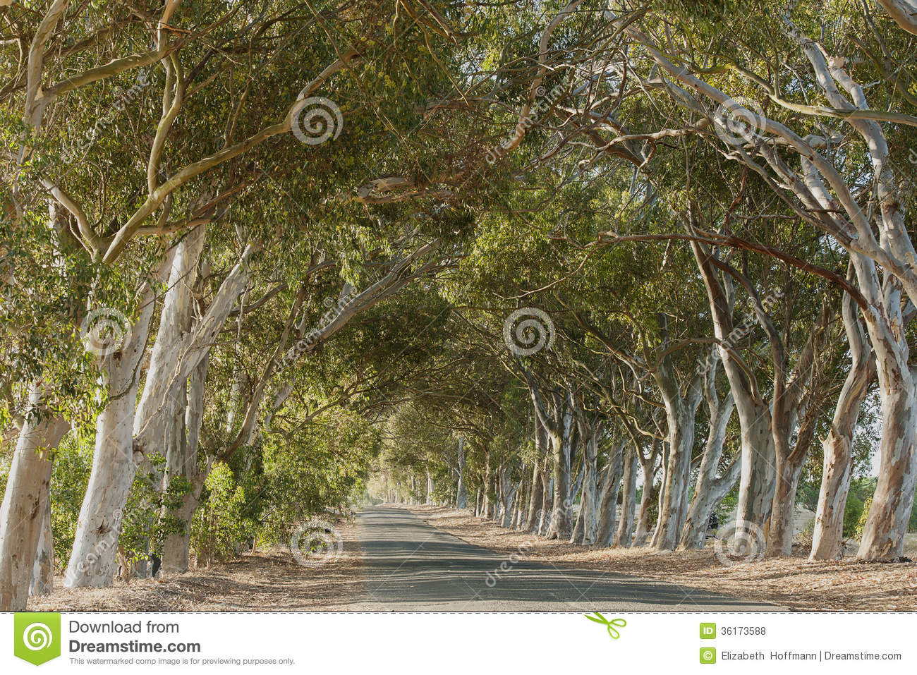 Road Between The Trees Stock Photo Image Of Tarmac Along