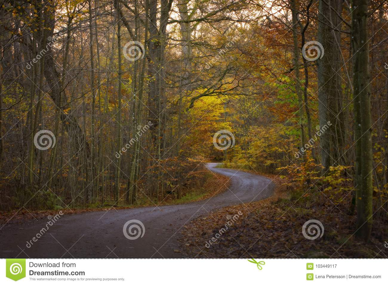 The Road Trough Autumn Forest Wallpaper