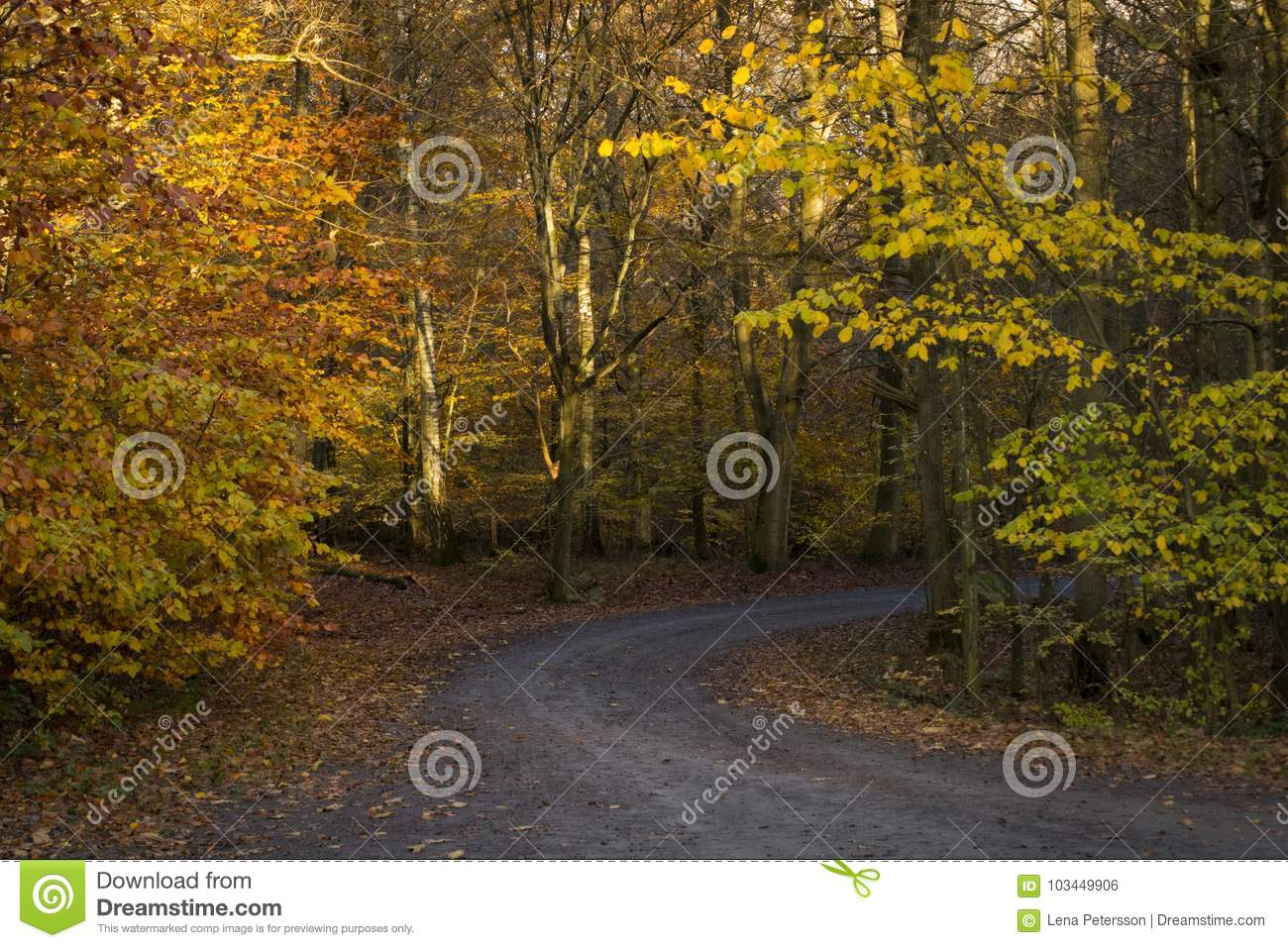 Download Road Trough The Autumn Forest Wallpaper Stock Photo