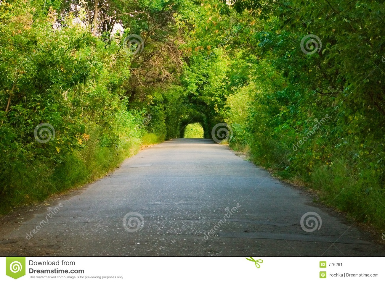 Road Under Green Trees Stock Image Image 776291