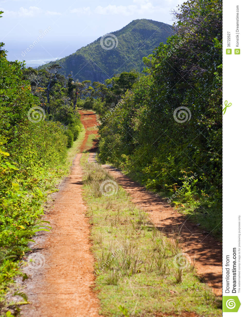 The Road In The Wood, Mauritius.Landscape In A Sunny Day