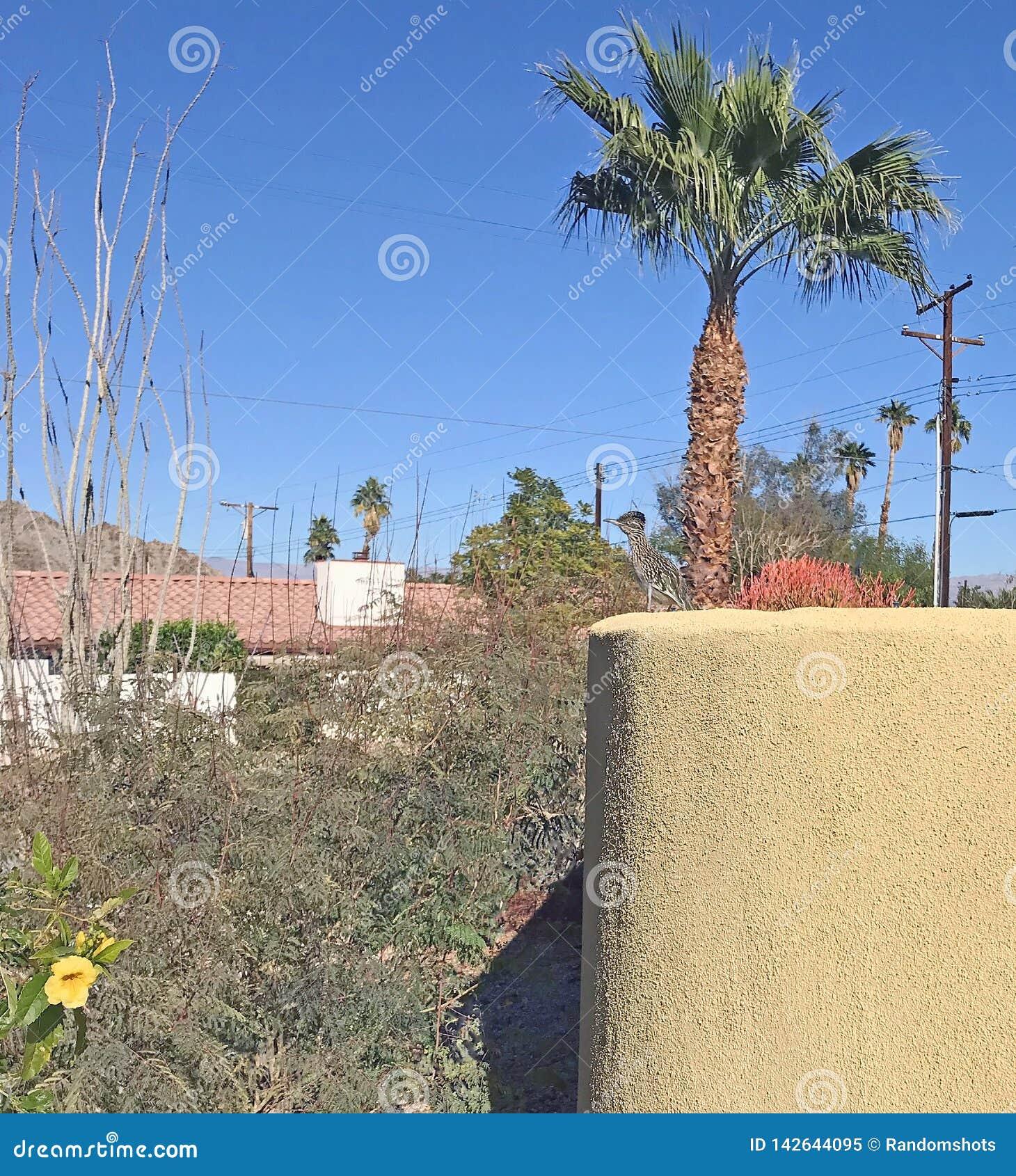 Roadrunner juvenil em uma parede amarela