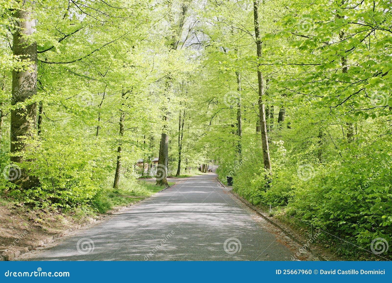 Roads of a beautifull swiss park stock photo image