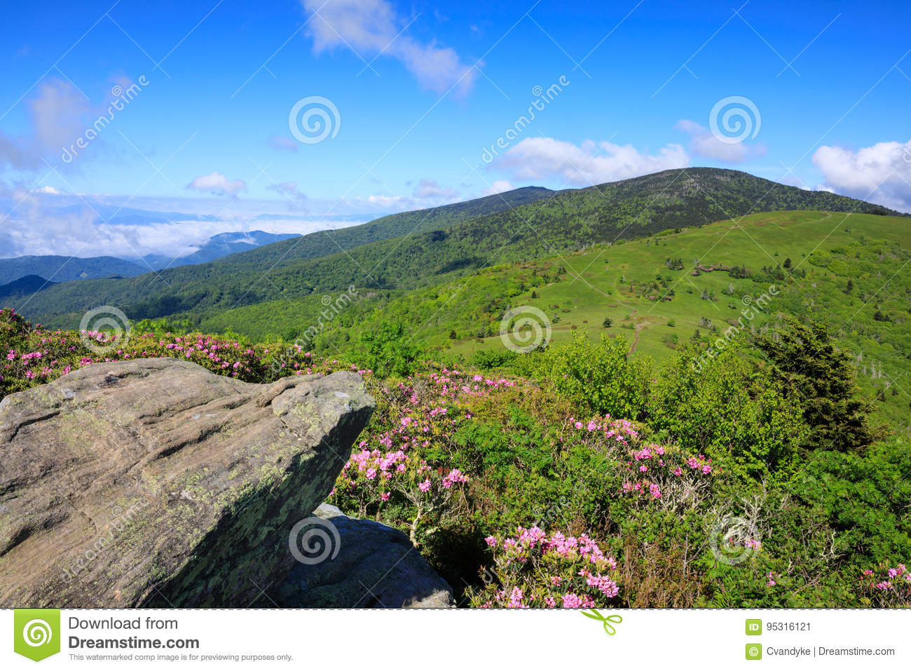 Roan Mountain Highlands North Carolina