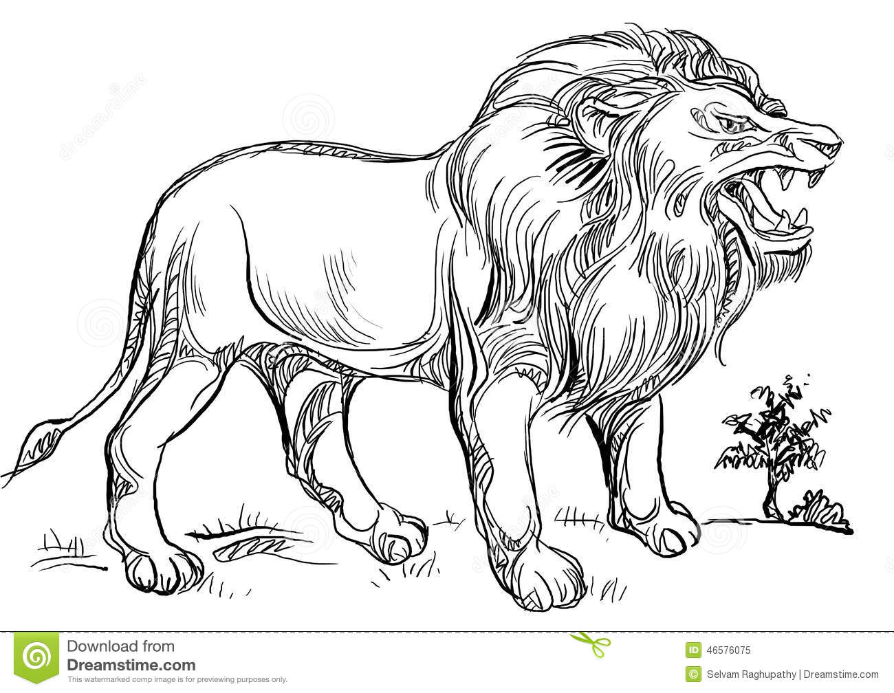 Roaring Lion Stock Illustration - Image: 46576075 - photo#47