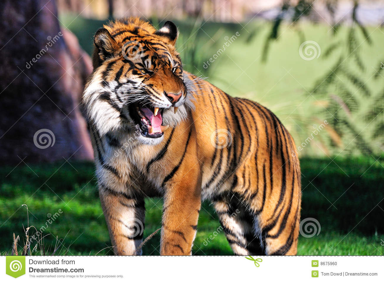Dangerous wild cat is on the house live - 5 7