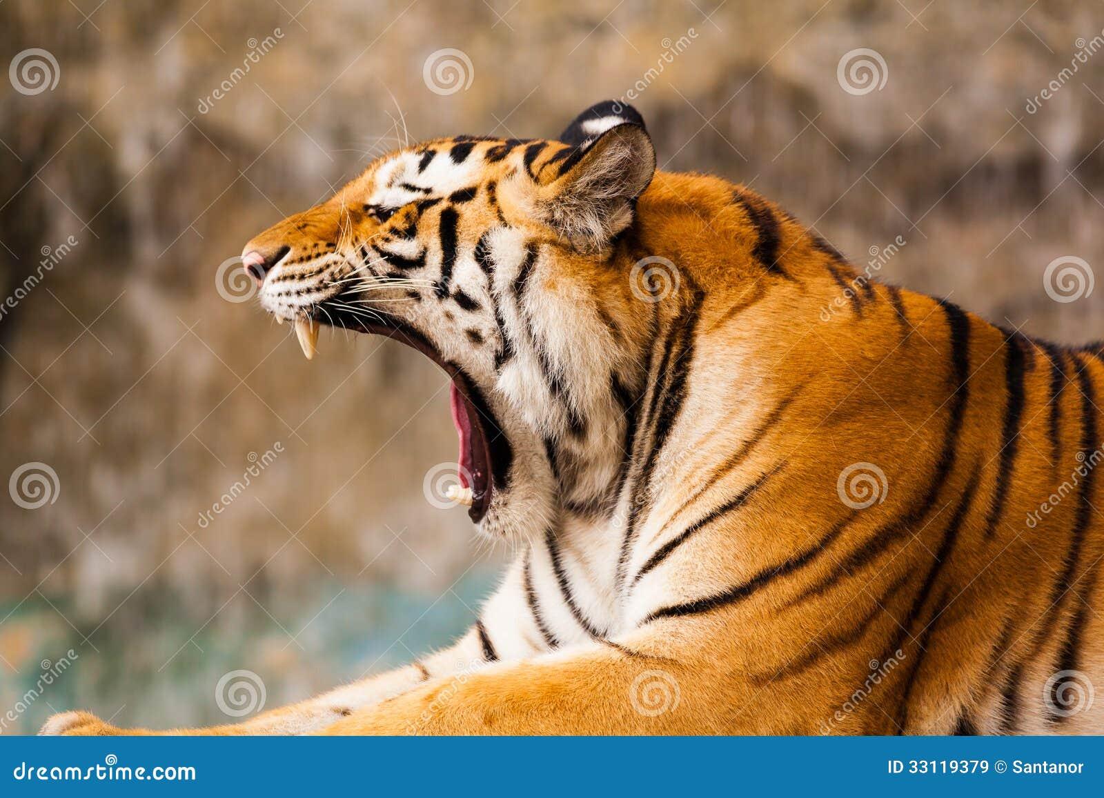 Tiger Roar Side View - photo#21