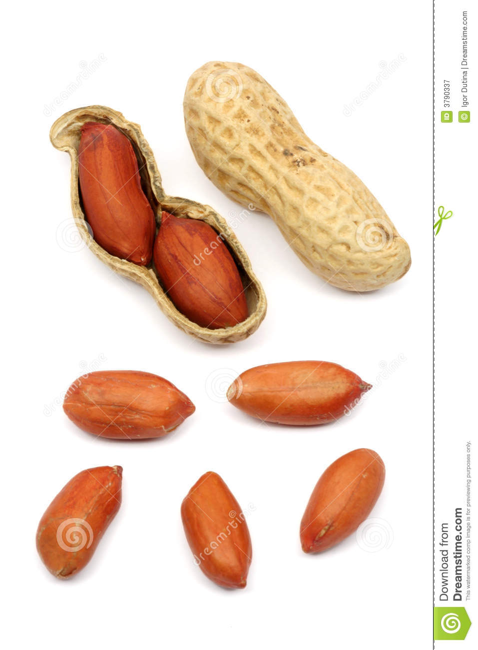 Roasted peanuts isolated