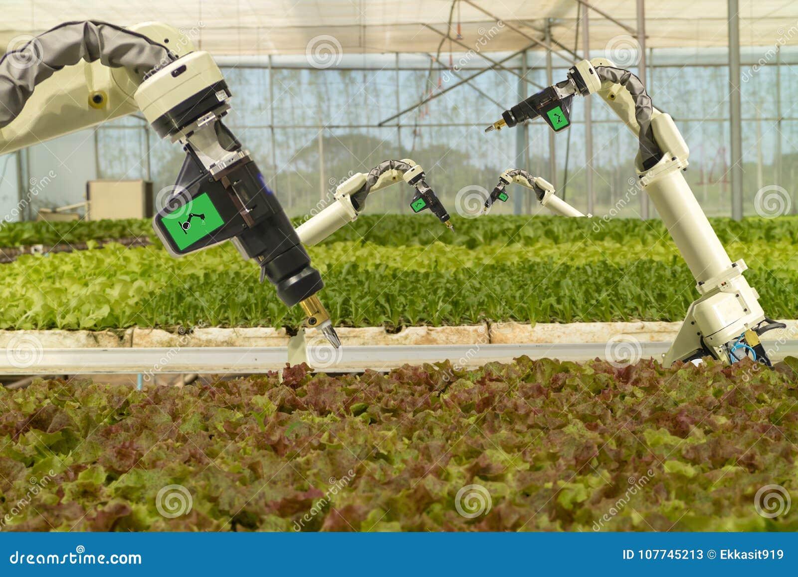 Robótico elegante en el concepto futurista de la agricultura, automatización de los granjeros del robot se debe programar para tr