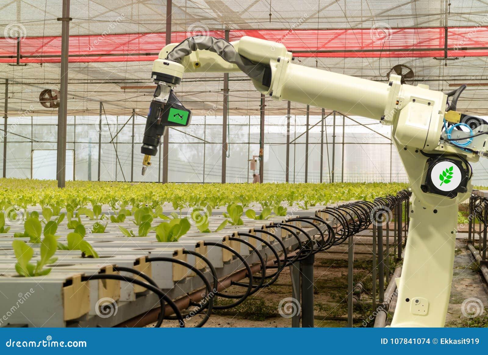 Robótico esperto no conceito futurista da agricultura, automatização dos fazendeiros do robô deve ser programado para trabalhar p