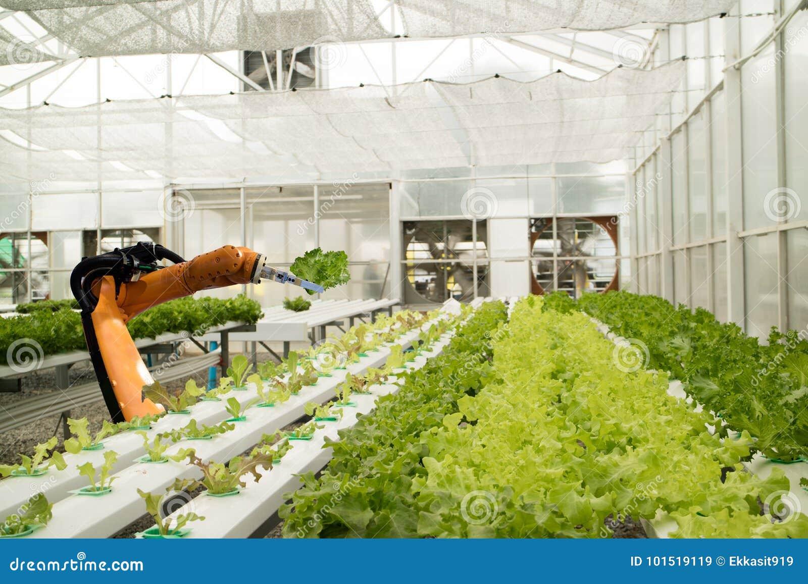 Robótico esperto no conceito futurista da agricultura, fazendeiros do robô