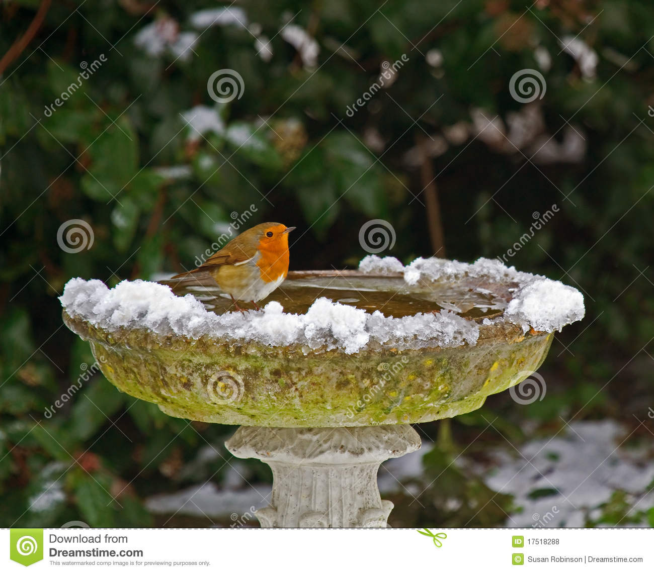 Robin Bird in Bath