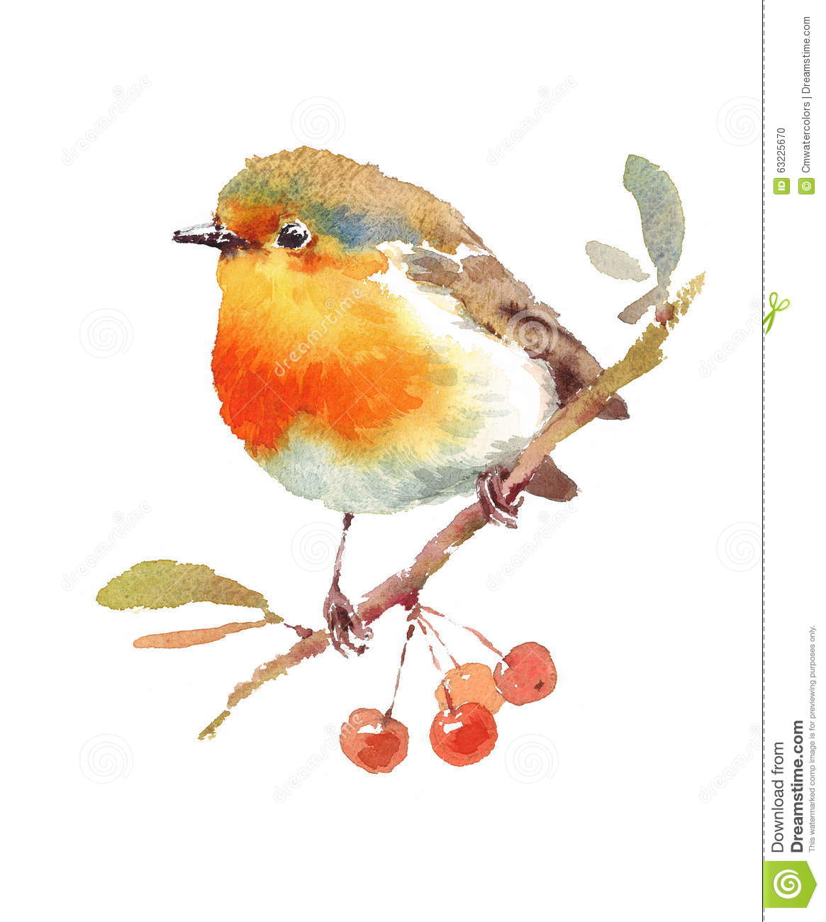 Robin Bird And Berries Watercolor Illustration Hand Drawn ...