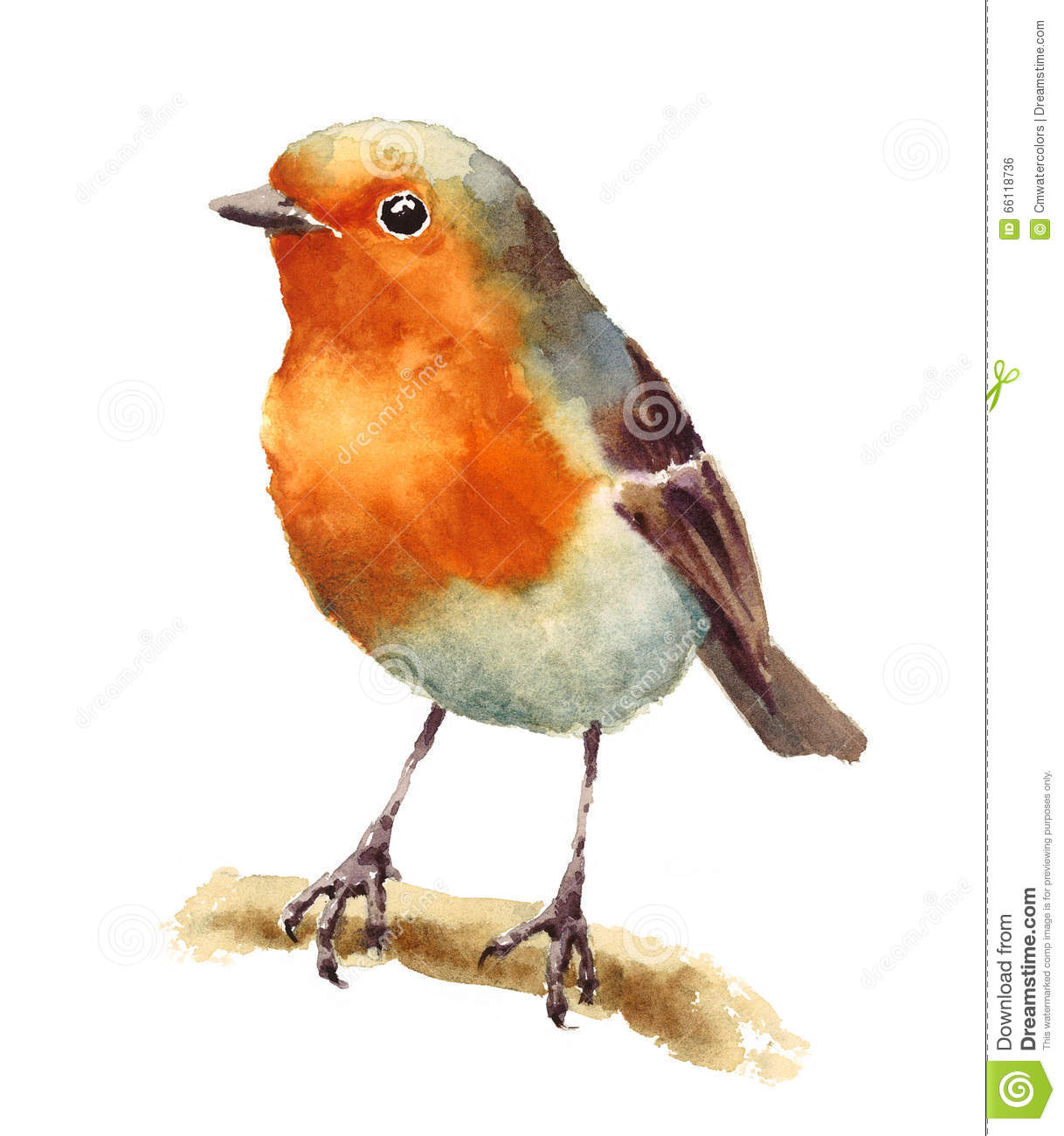 Robin Bird On The Branch Watercolor Illustration Hand ...
