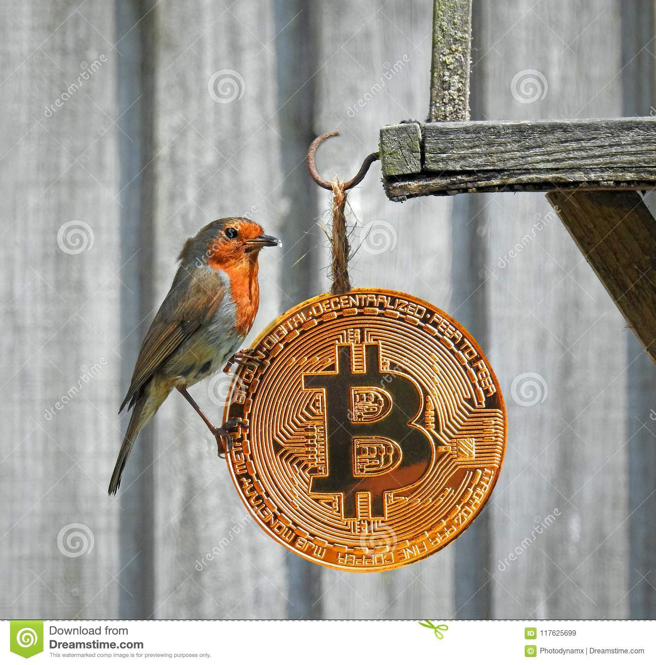 Bitcoins pictures of birds e games betting