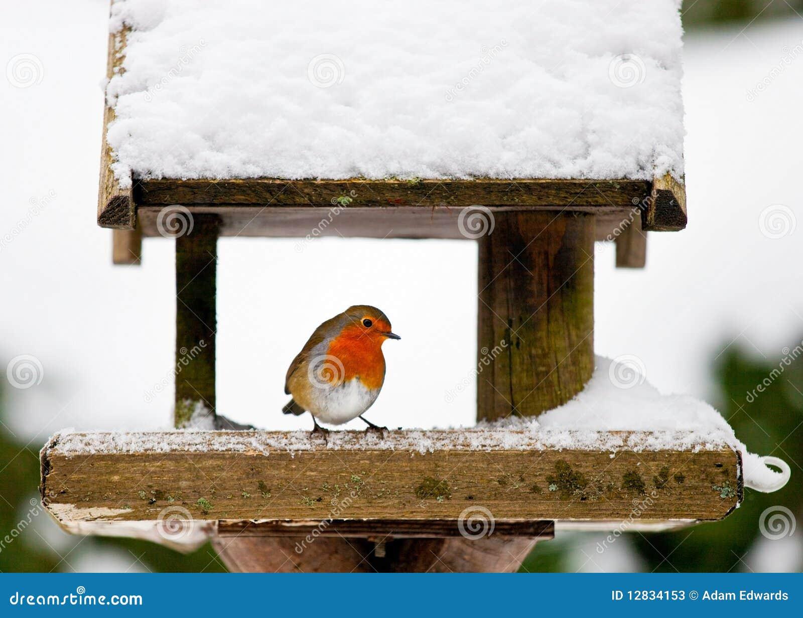 Robin an einer schneebedeckten Vogelzufuhr im Winter