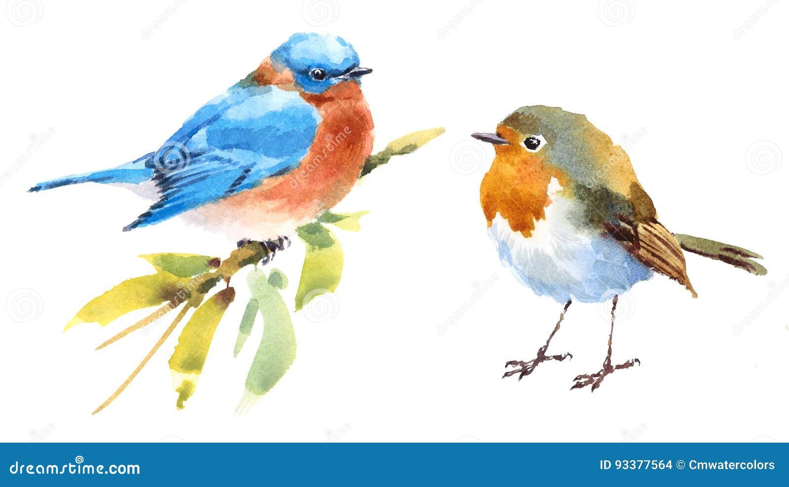 Robin et tiré par la main réglé d illustration d aquarelle d oiseaux d oiseau bleu