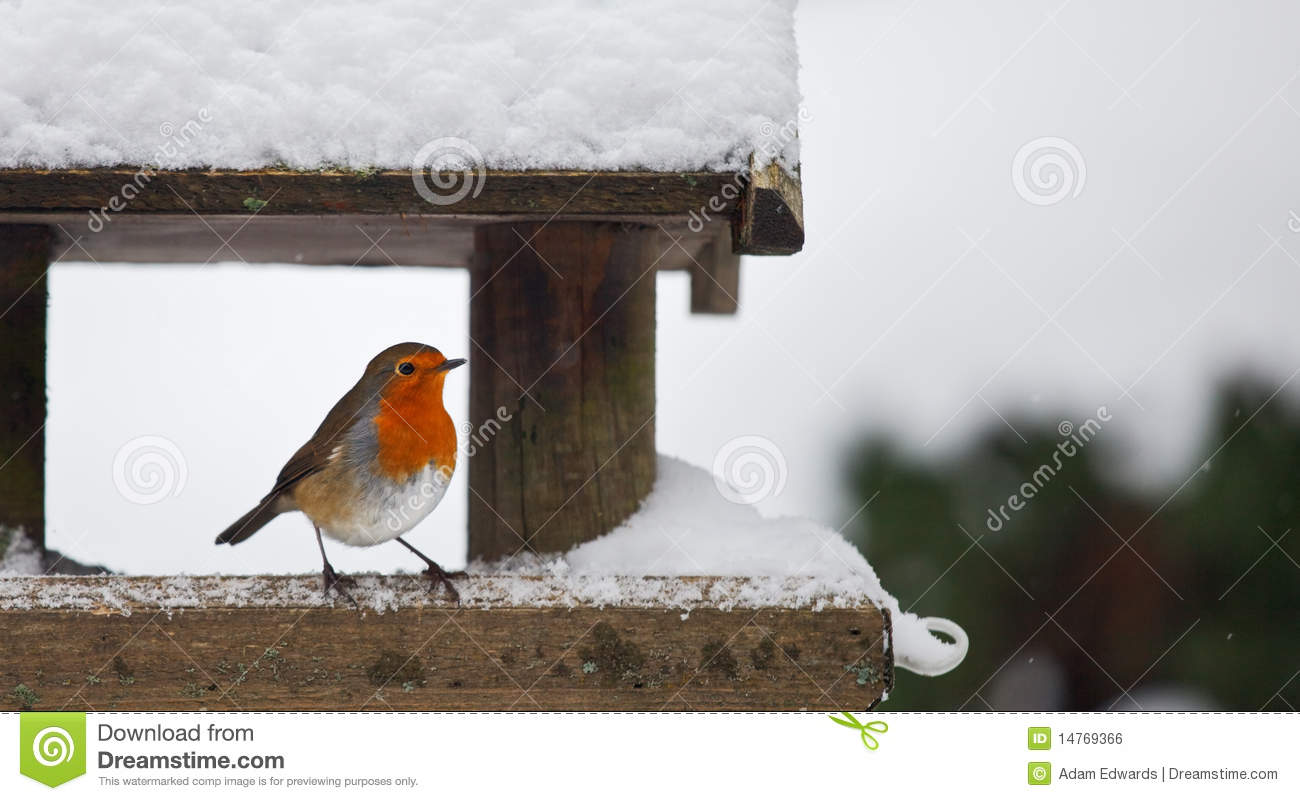 Robin At A Snowy Bird Feeder In Winter Stock Photo Image
