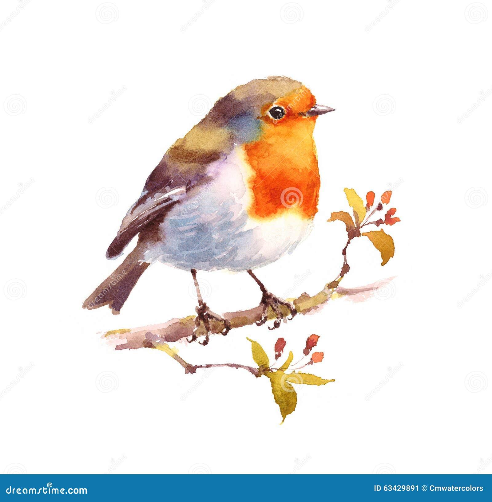 Robin Watercolor Bird Illustration Hand A Peint ...