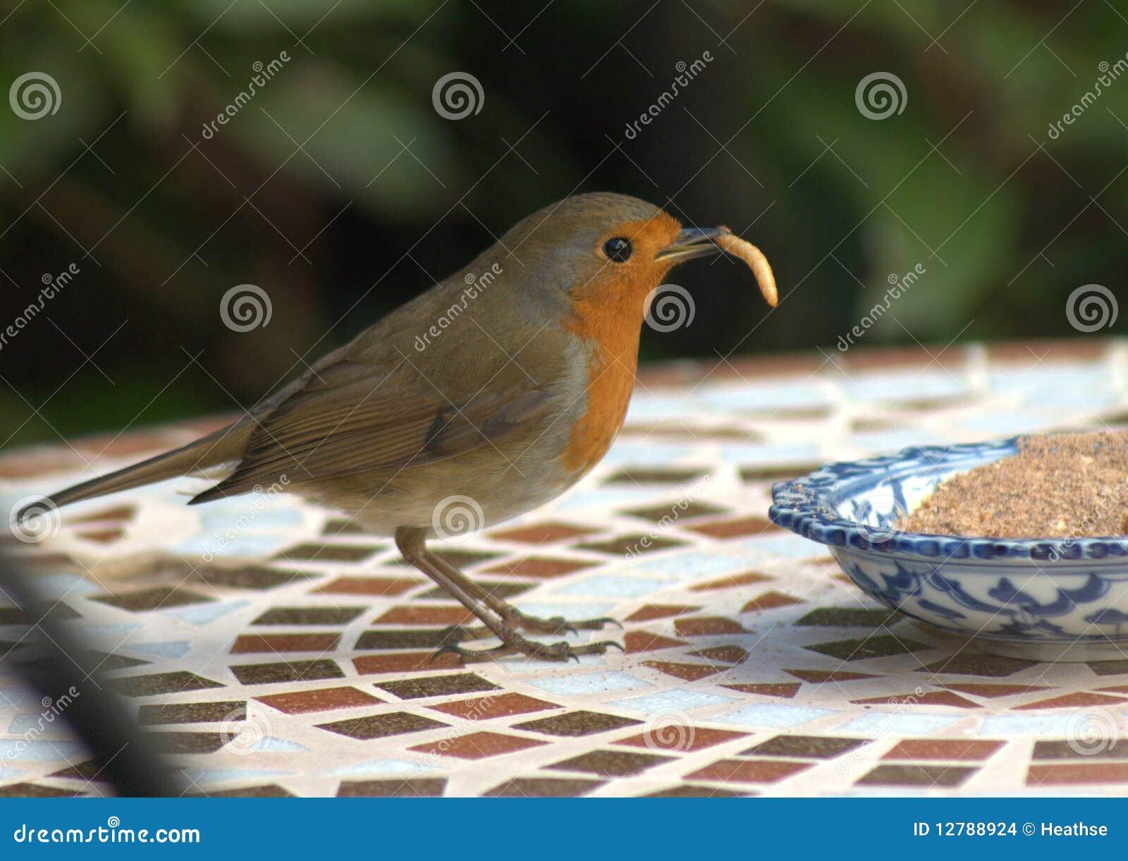 Robin With Worm Stock Photo Cartoondealer Com 25899552