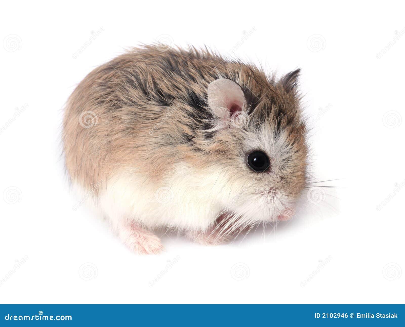 www hamster com free