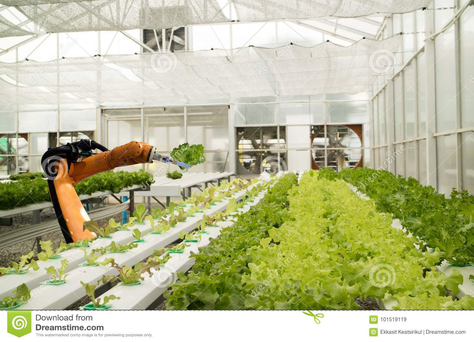 Robot astuto nel concetto futuristico di agricoltura, agricoltori del robot