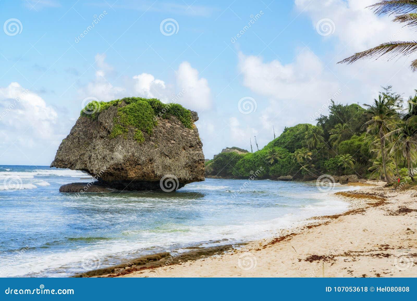 Roca derecha libre de Overgreen, playa de Barbados