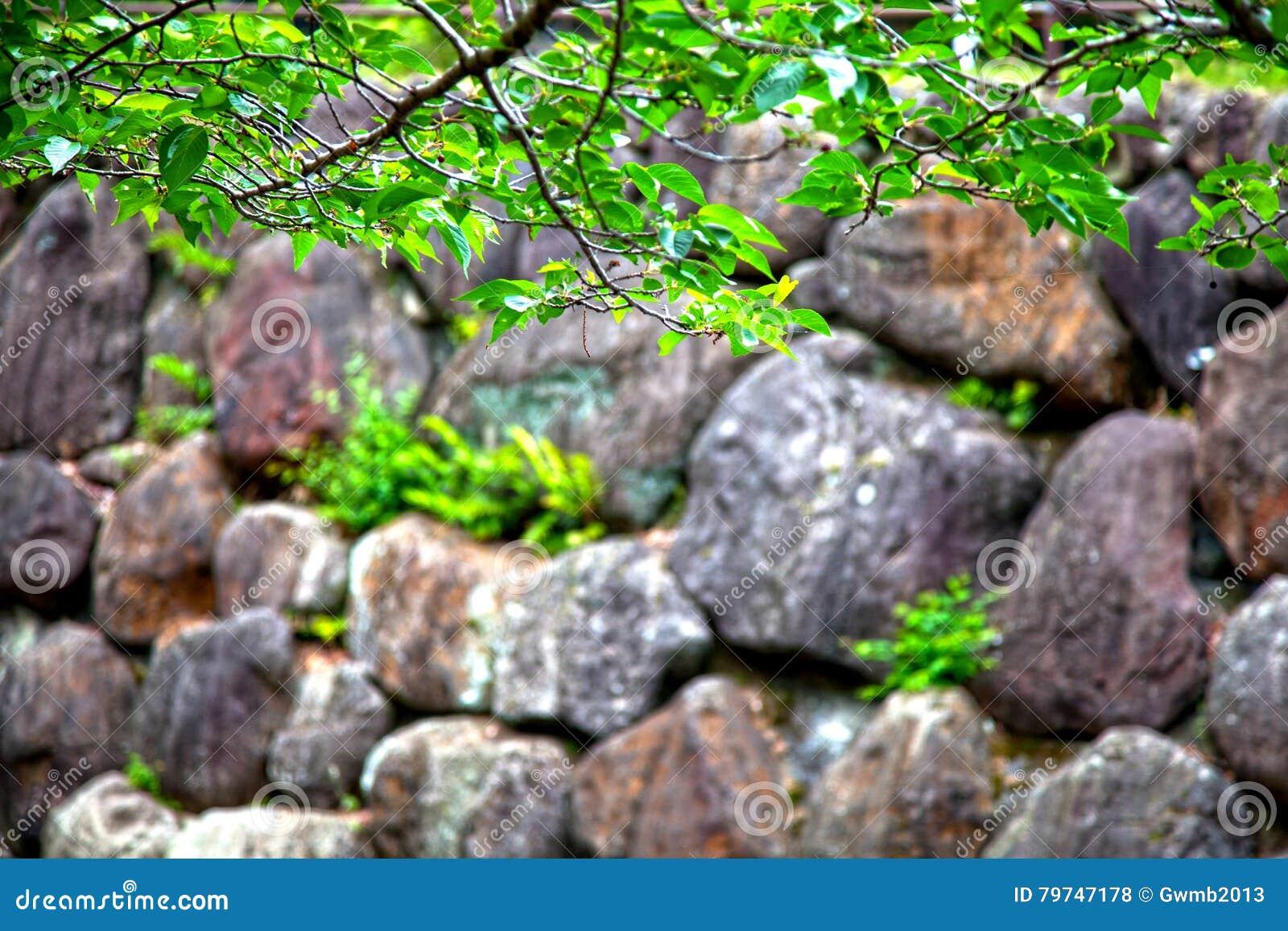Rocas al lado de una corriente