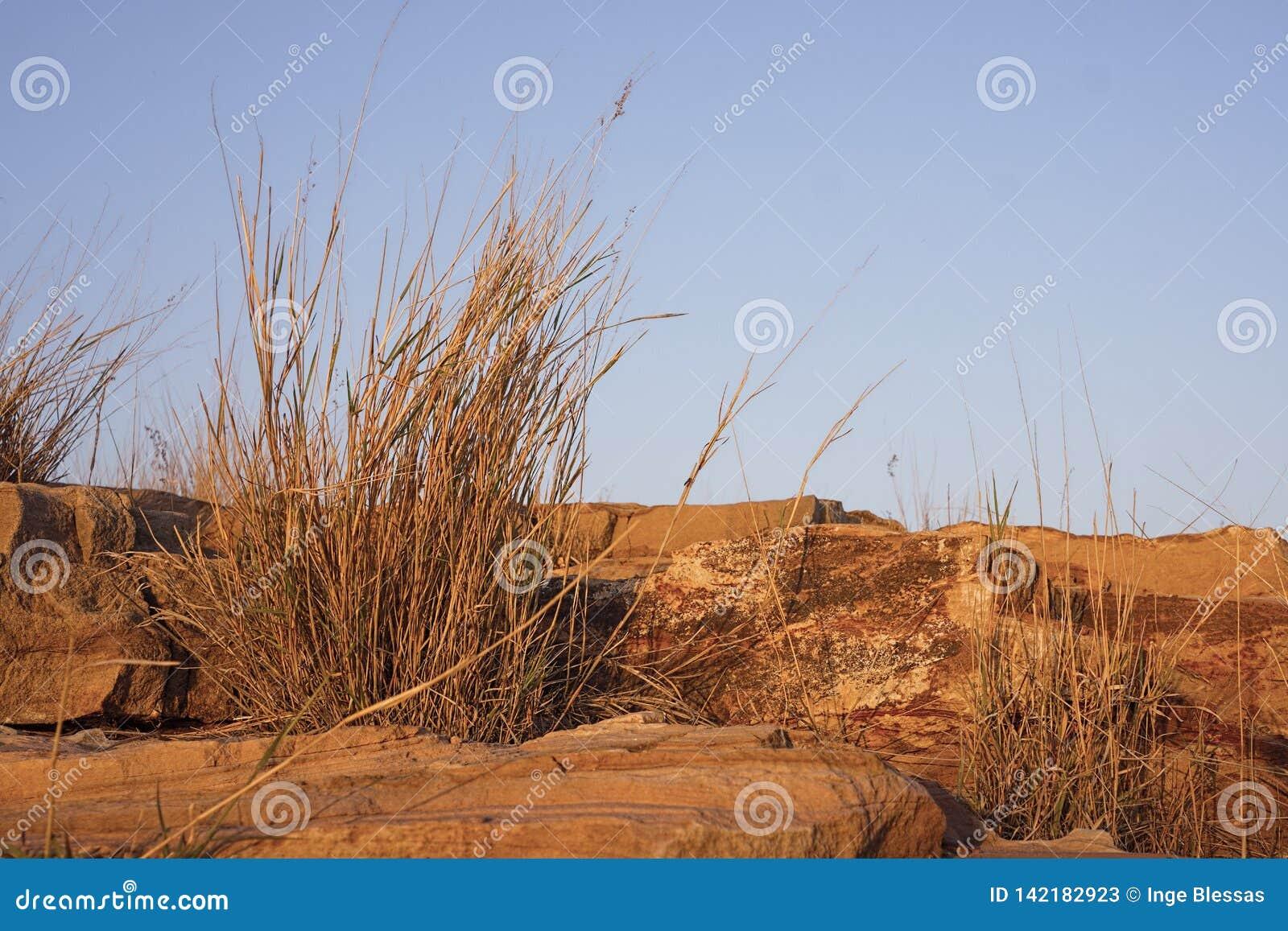 Rocas e hierbas de la piedra arenisca en luz de oro de la puesta del sol