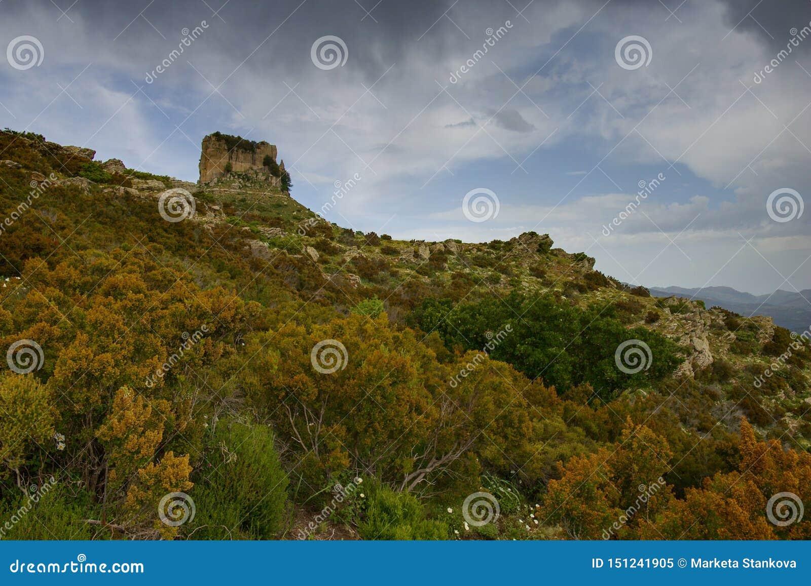 Roccia del calcare della liana della Sardegna Perda e