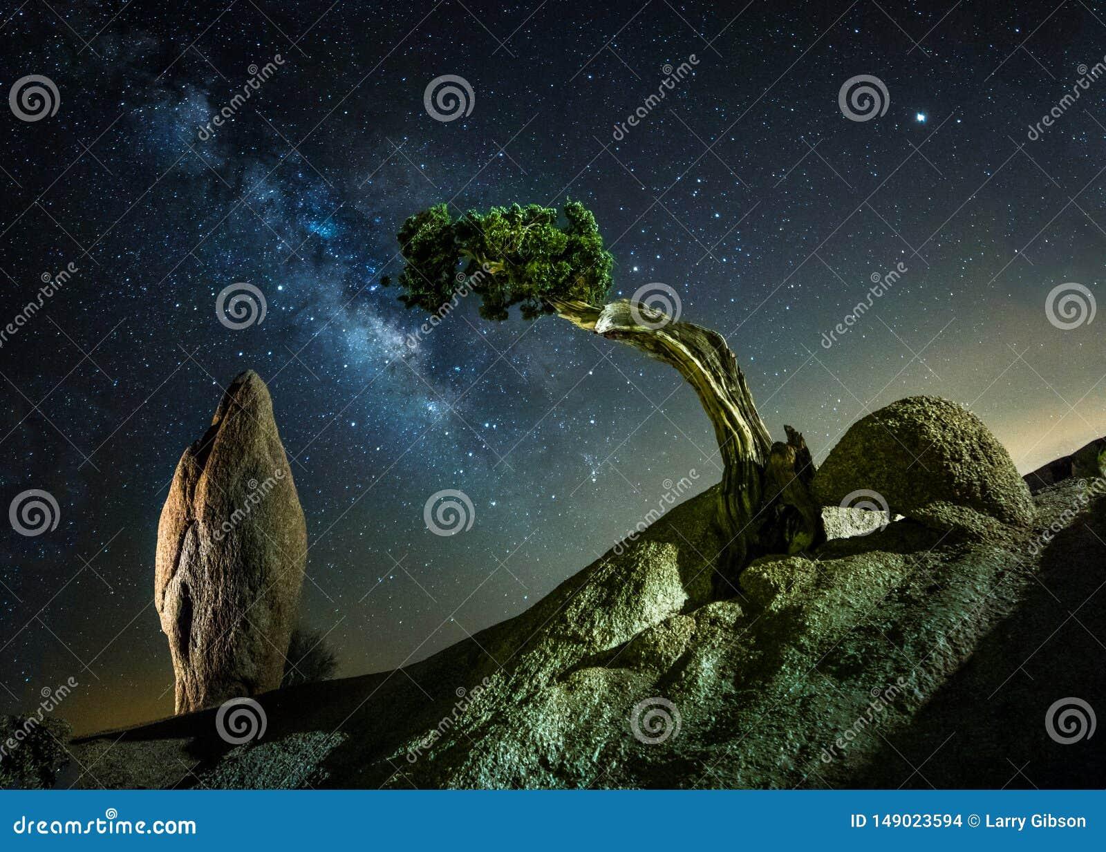 Rocha do monólito e parque nacional da árvore de Josha