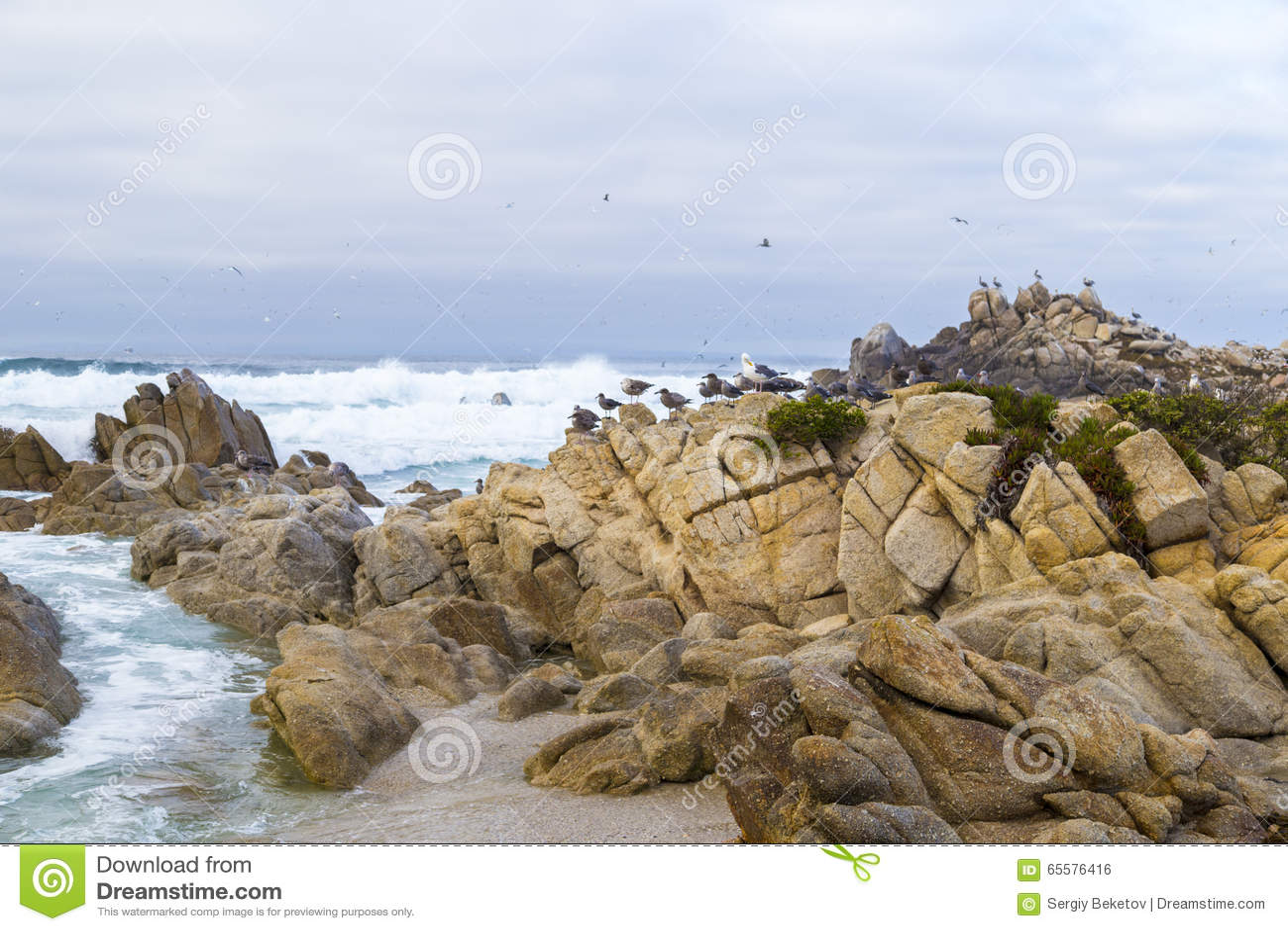 Rocha do pássaro com pássaros de água gaivotas e pássaros que sentam-se nas rochas, Monterey dos cormorões, Califórnia