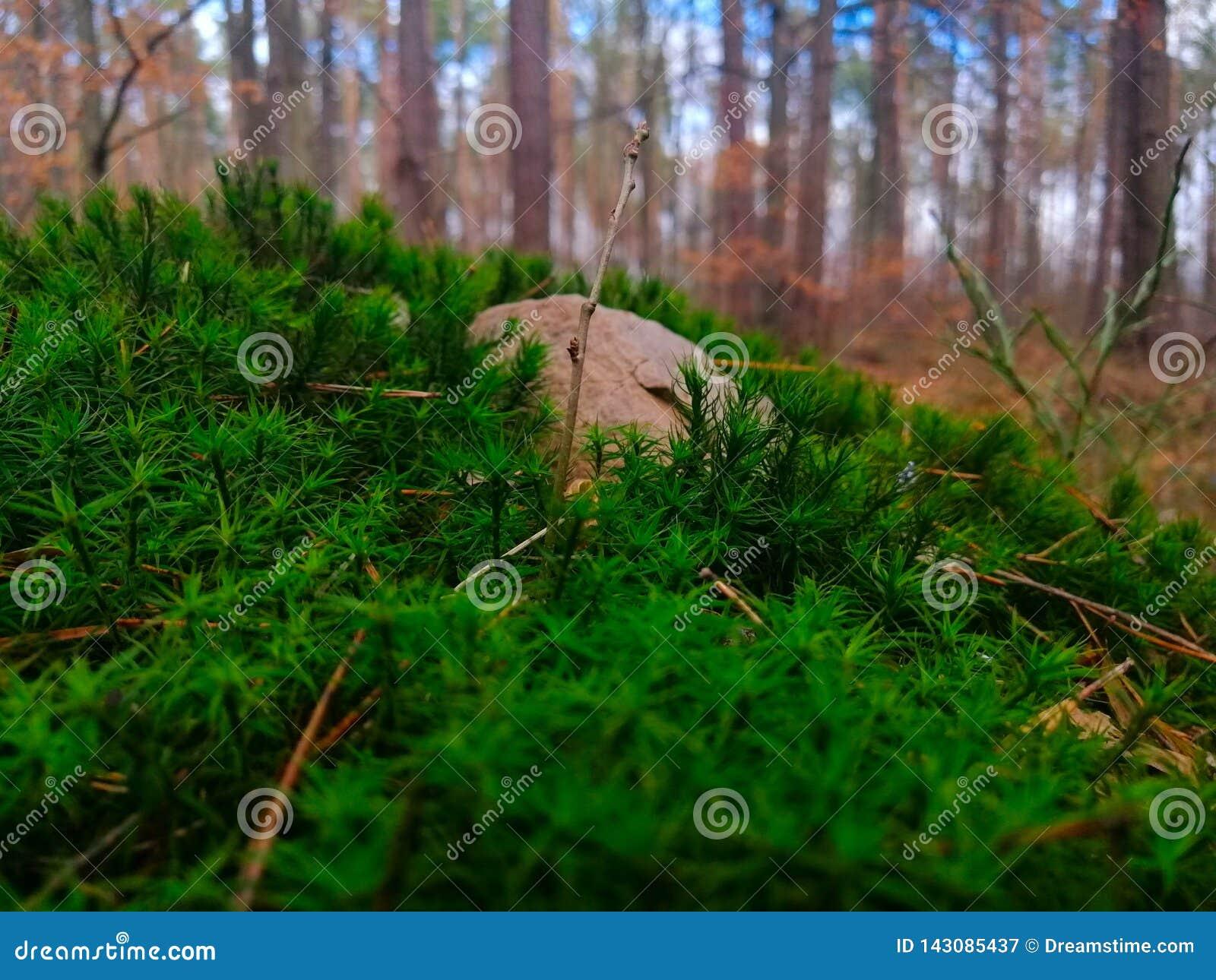 Rocha no musgo na floresta