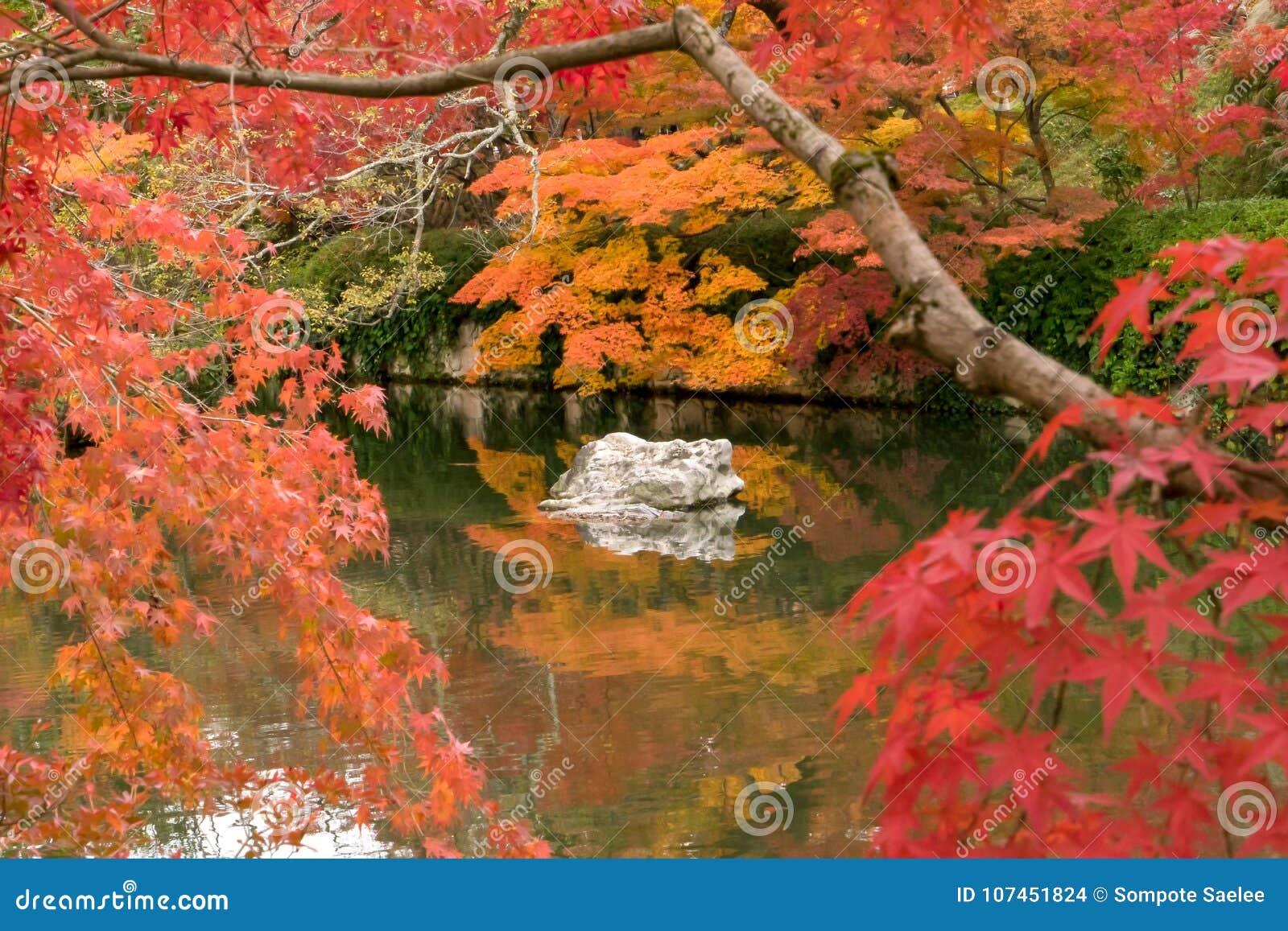 Roche blanche dans un étang de zen entourant par l arbre rouge d automne, Kyoto