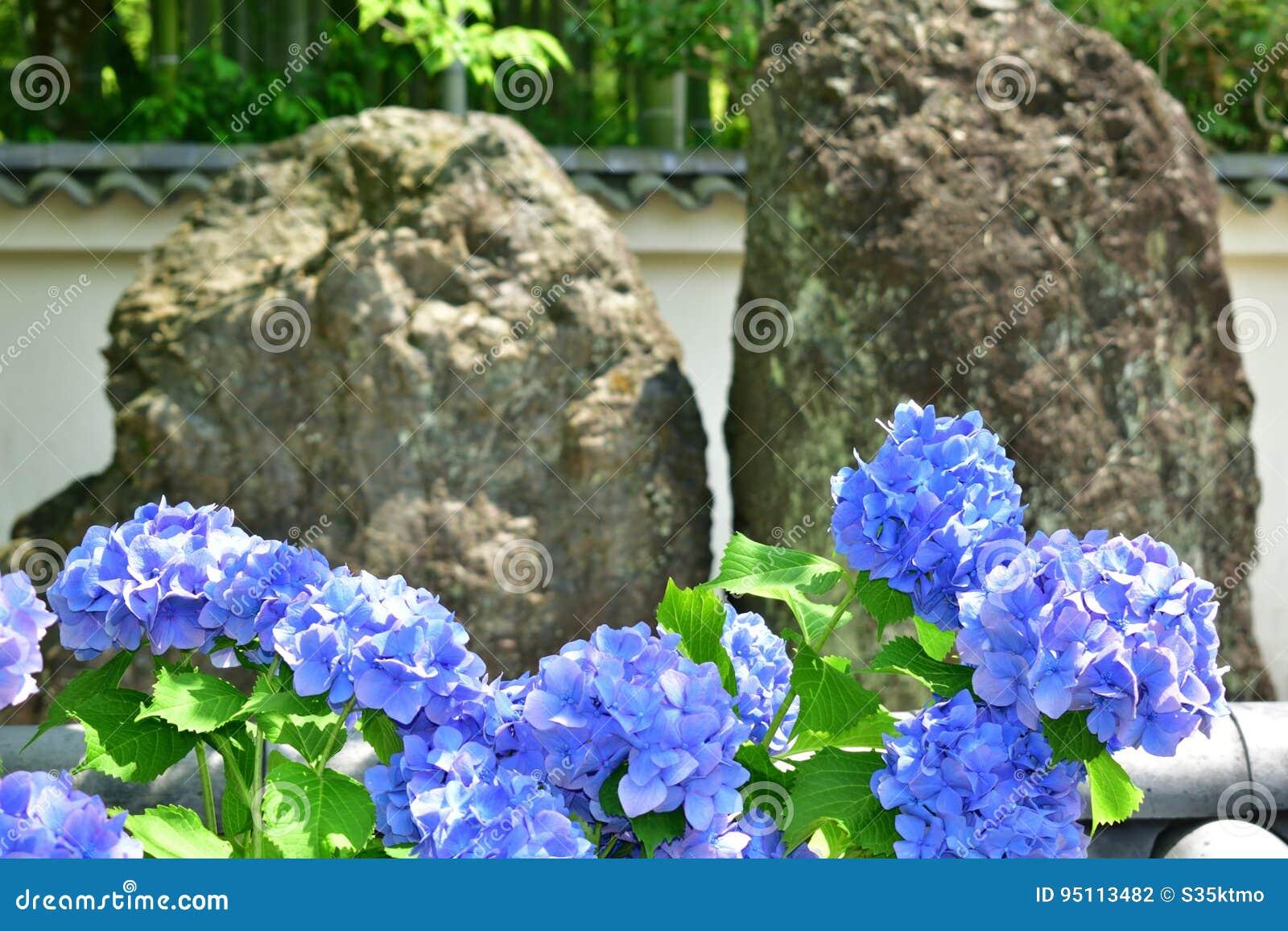 Roche De Zen Et Fleur De Jardin Japonais Japon Photo Stock Image