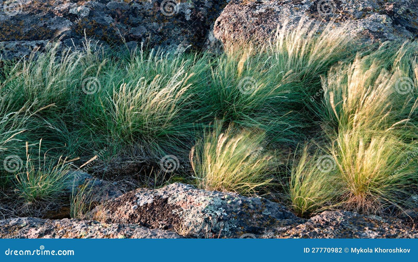 Roche et herbe